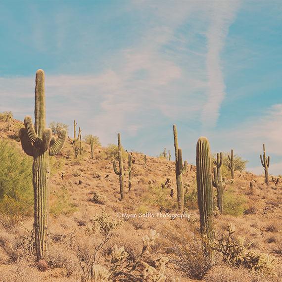The Saguaros