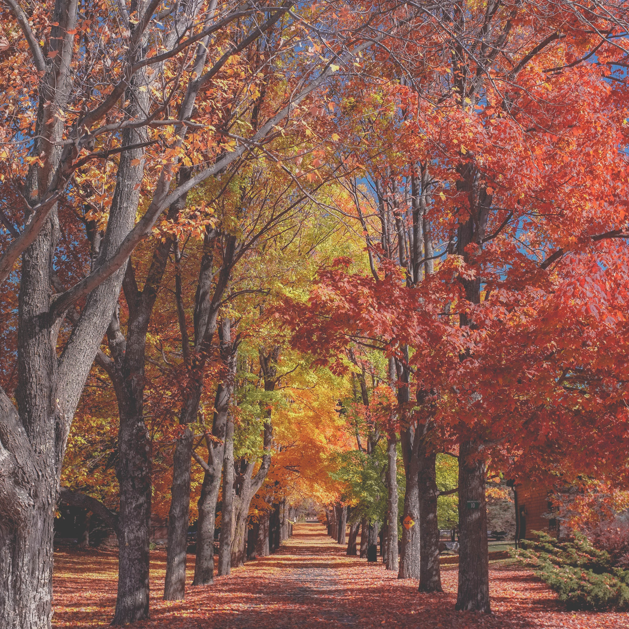 autumn fall leaves road tunnel.jpeg
