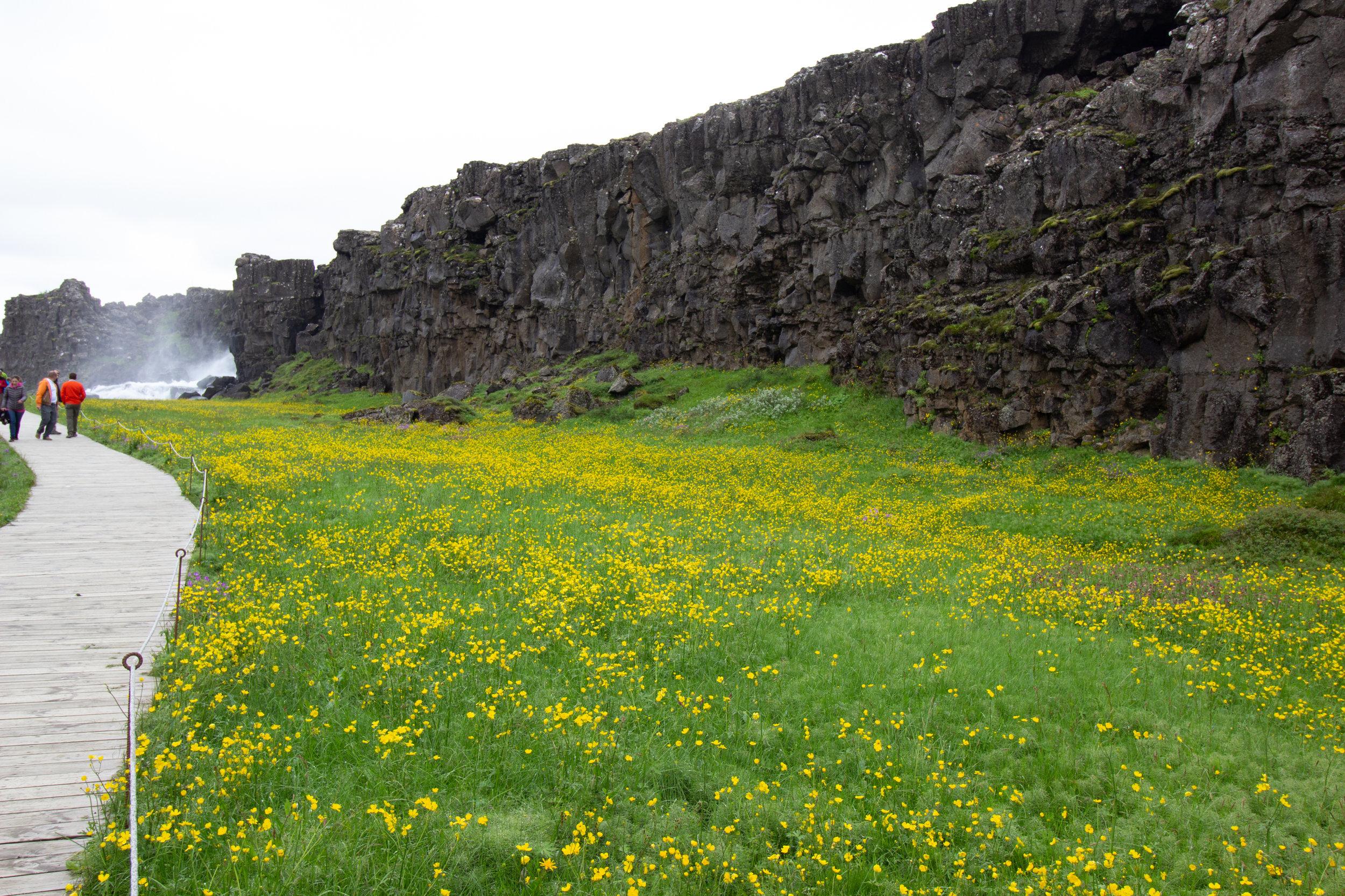 Iceland SS.goup 2-18.jpg