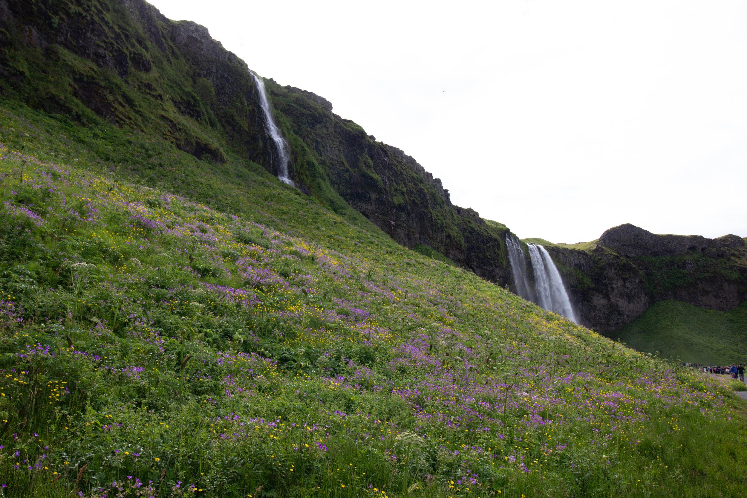Iceland SS-7.jpg