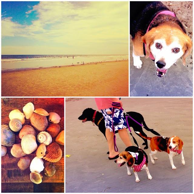 beachandbeagles_april.jpg