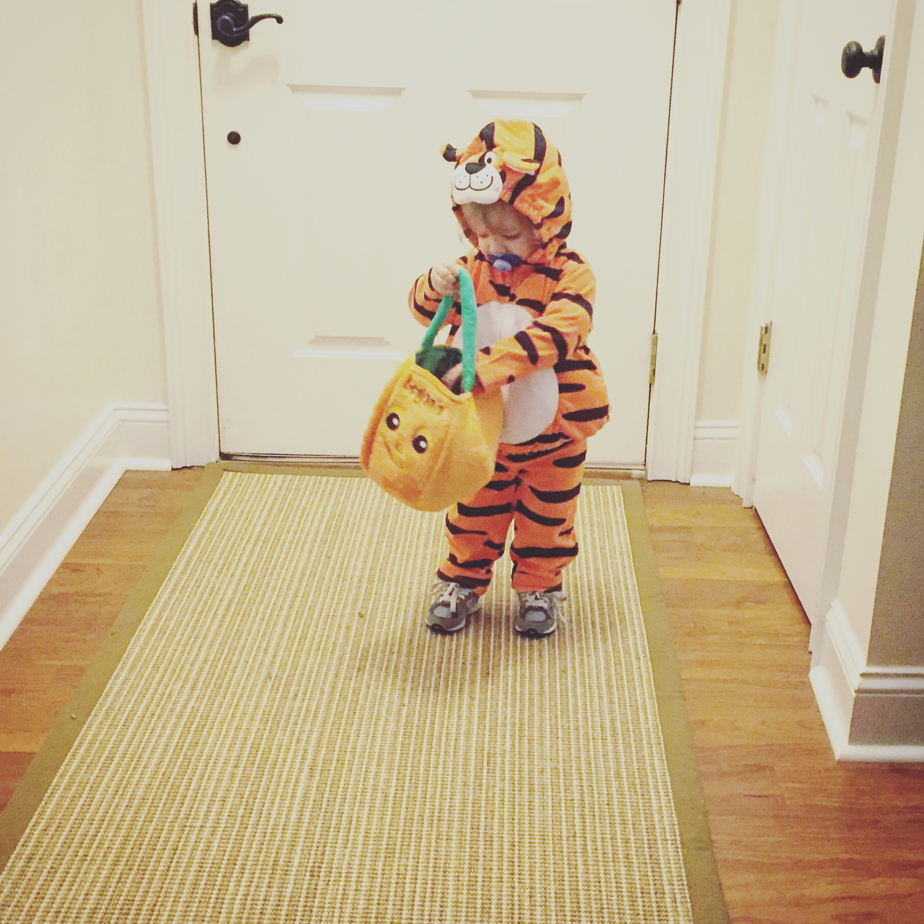 Training may have been a little crazy last week, but we had a fun Halloween. There was a Sweet little tiger on the prowl in my house.