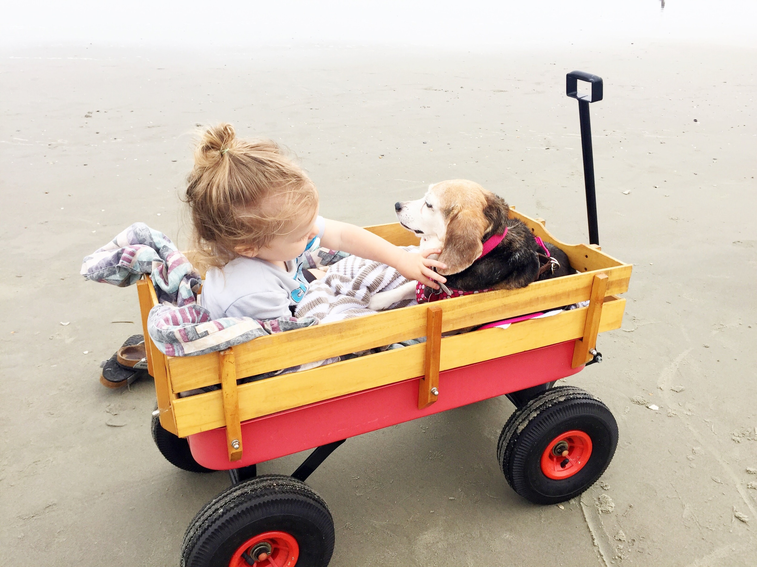 beachy-baby-and-dogs