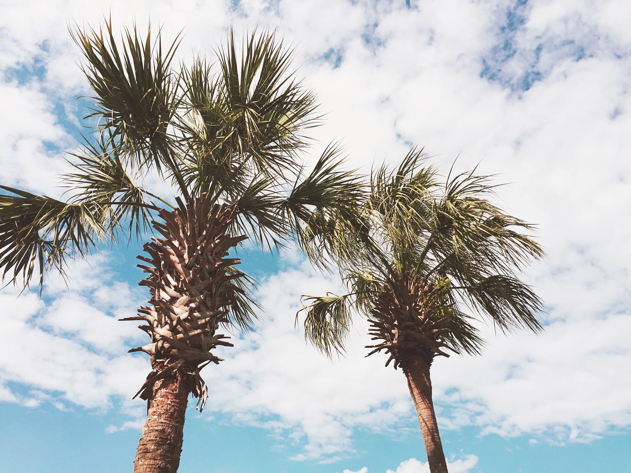 palm-trees-isle-of-palms-sc