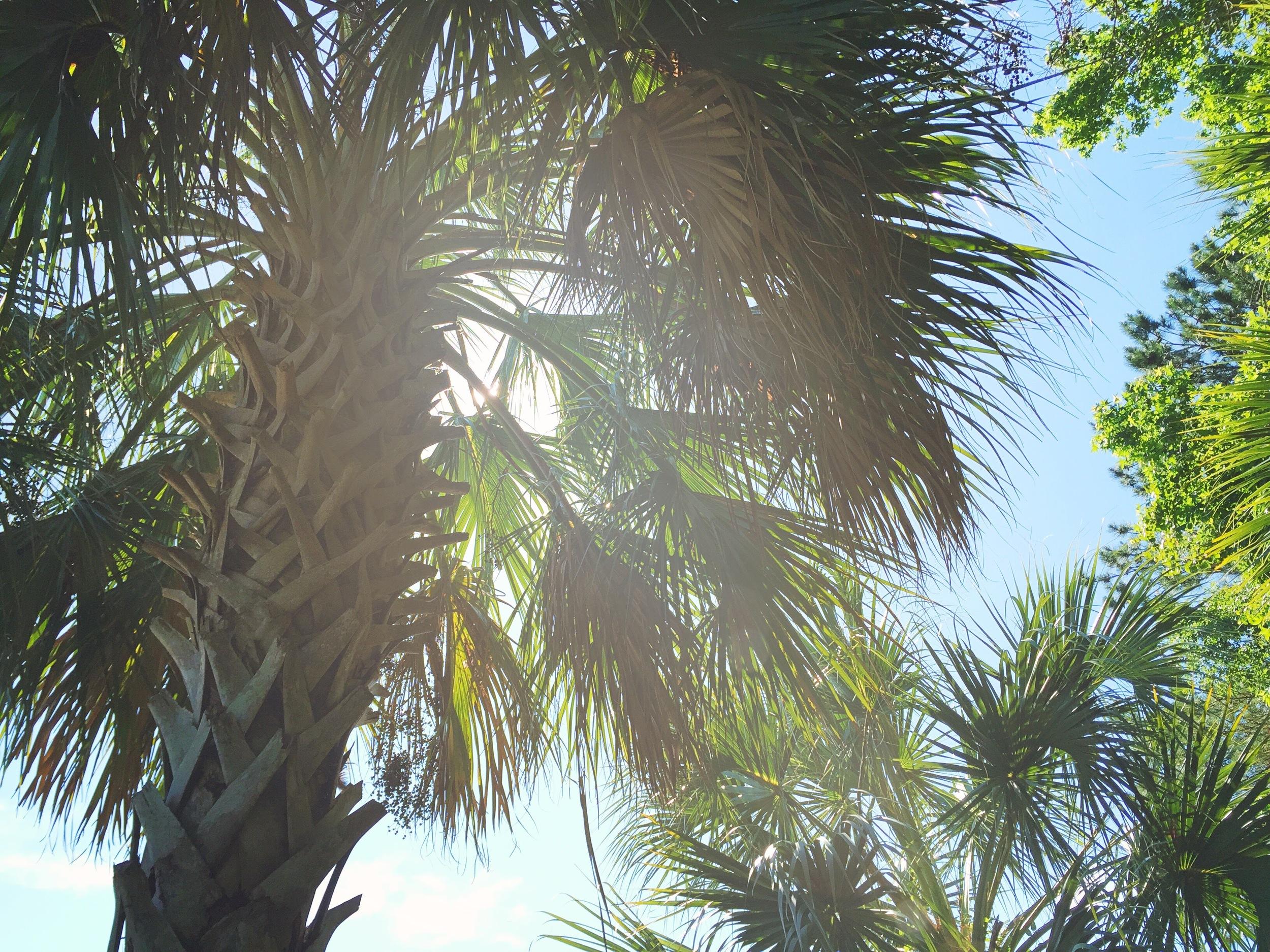 palm-trees-beach-life