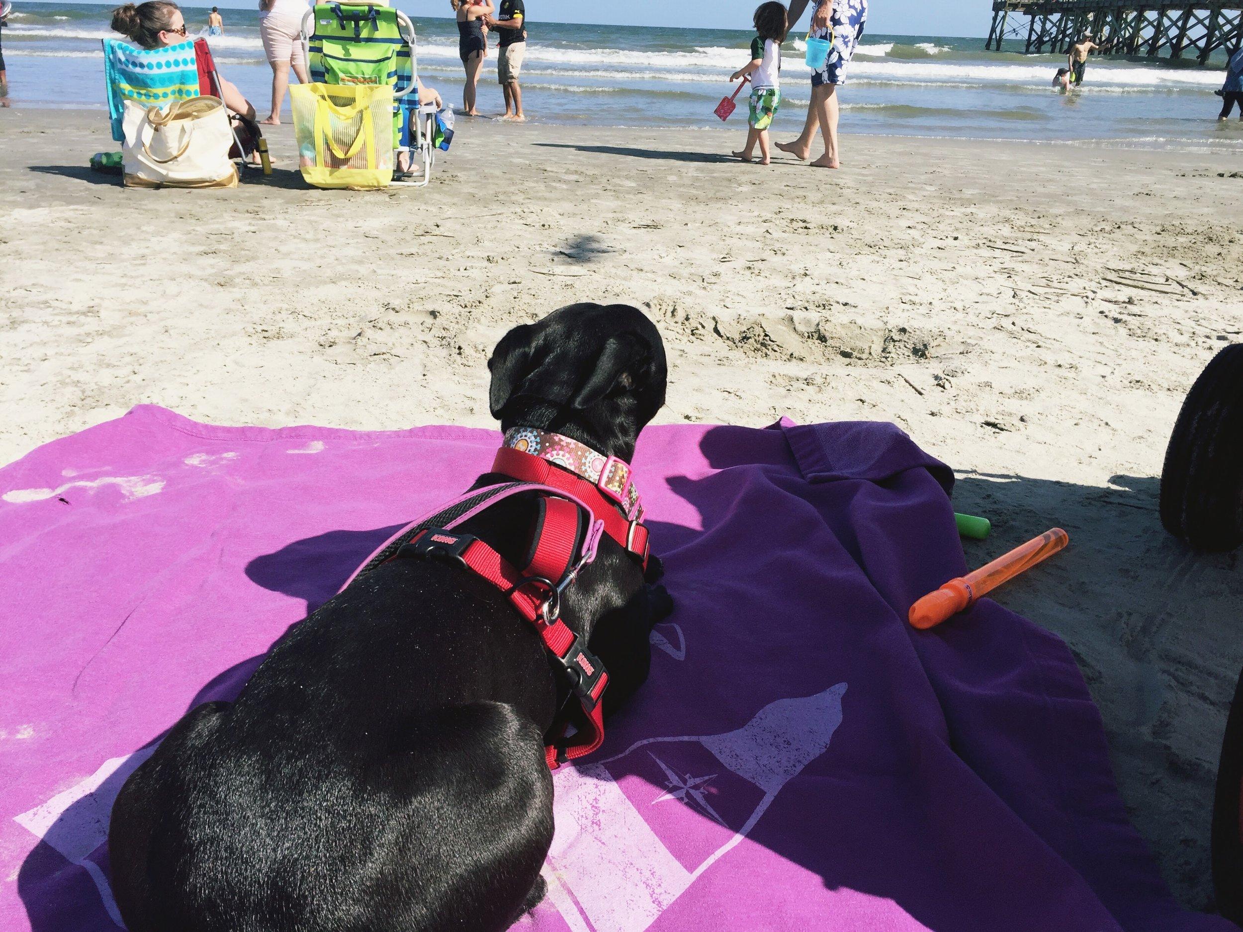 Macy at the beach!