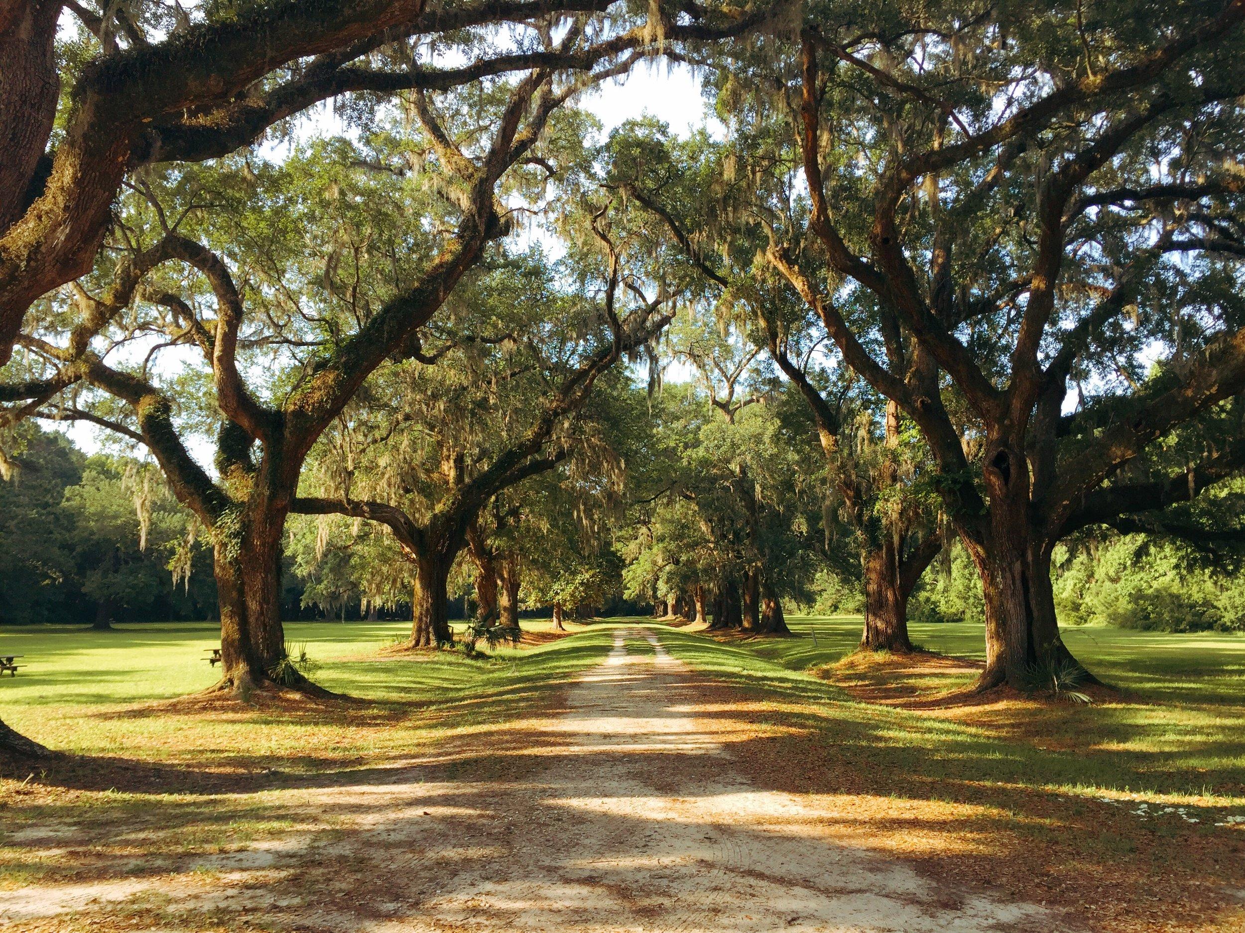 trails in charleston plantation