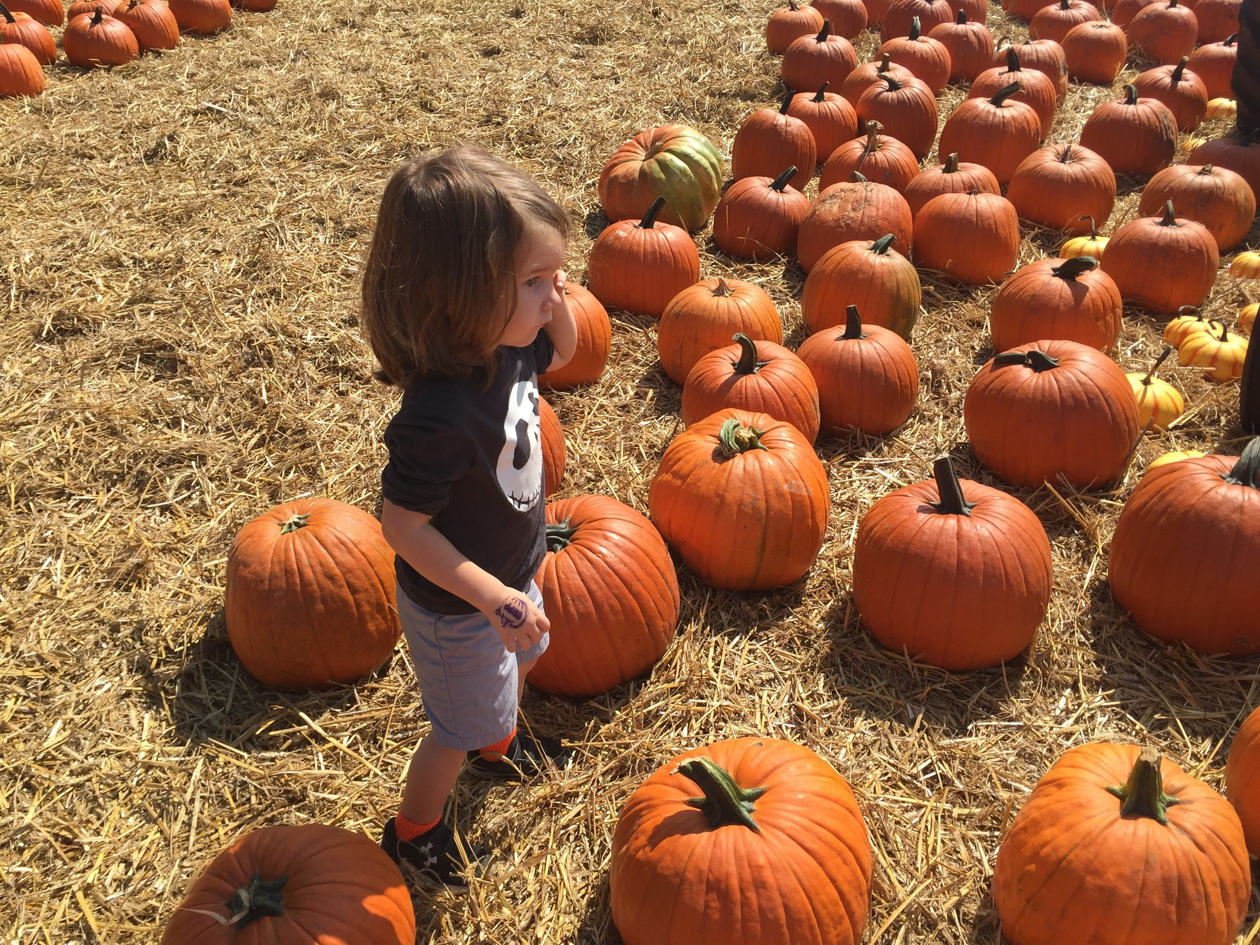 B trying to pick out his pumpkin