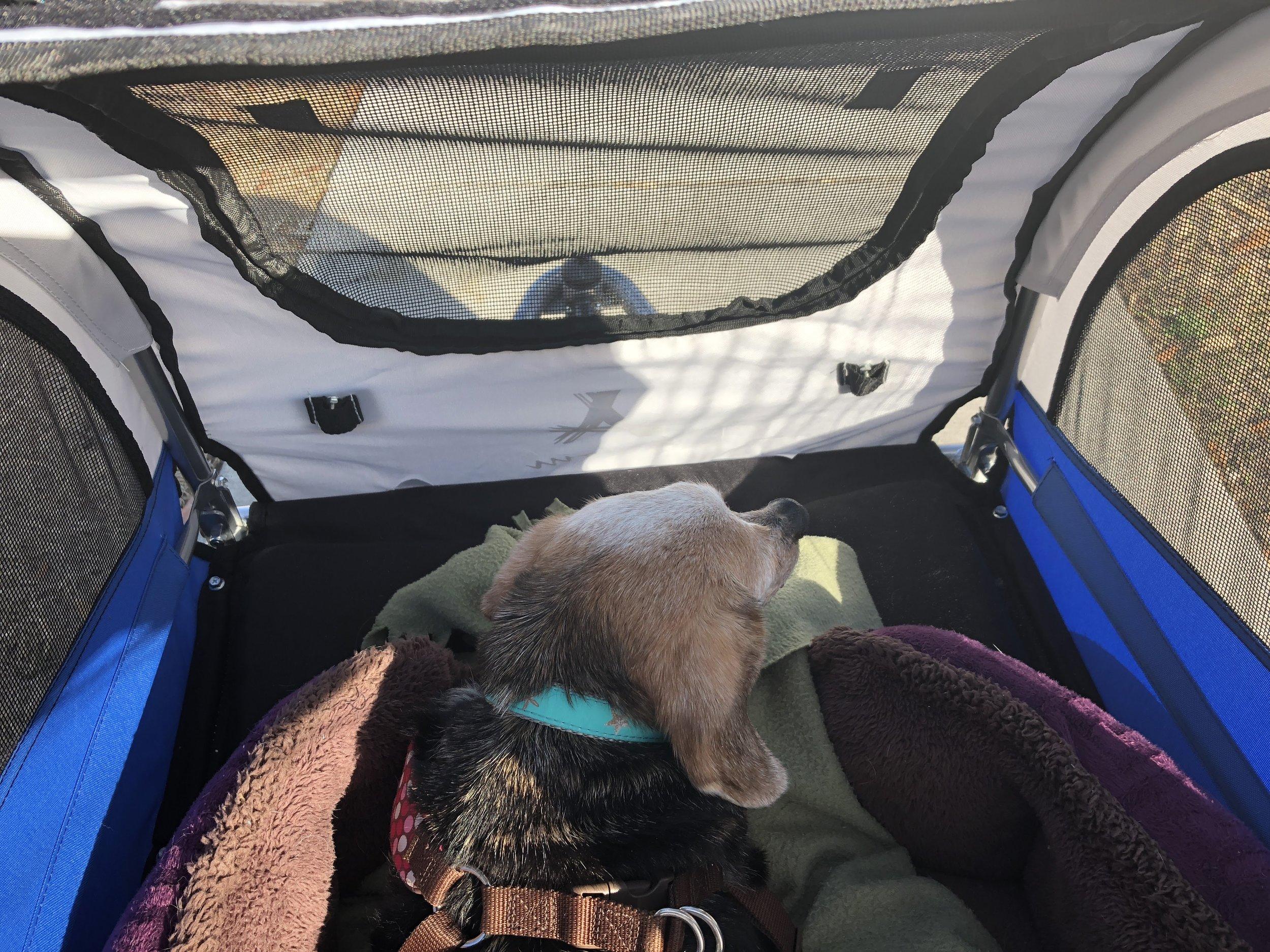 Sweet meadow in her stroller