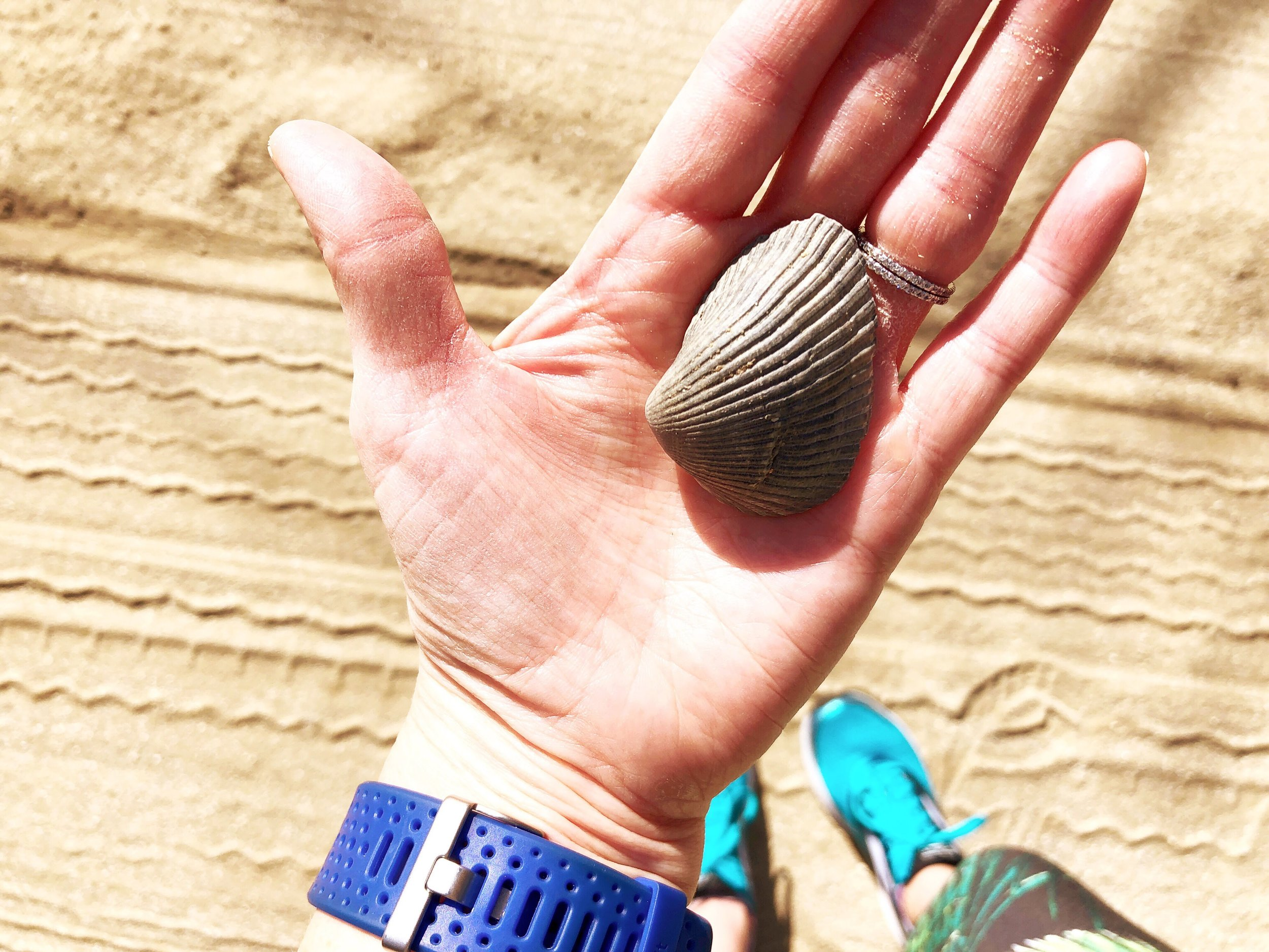 seashells from my run
