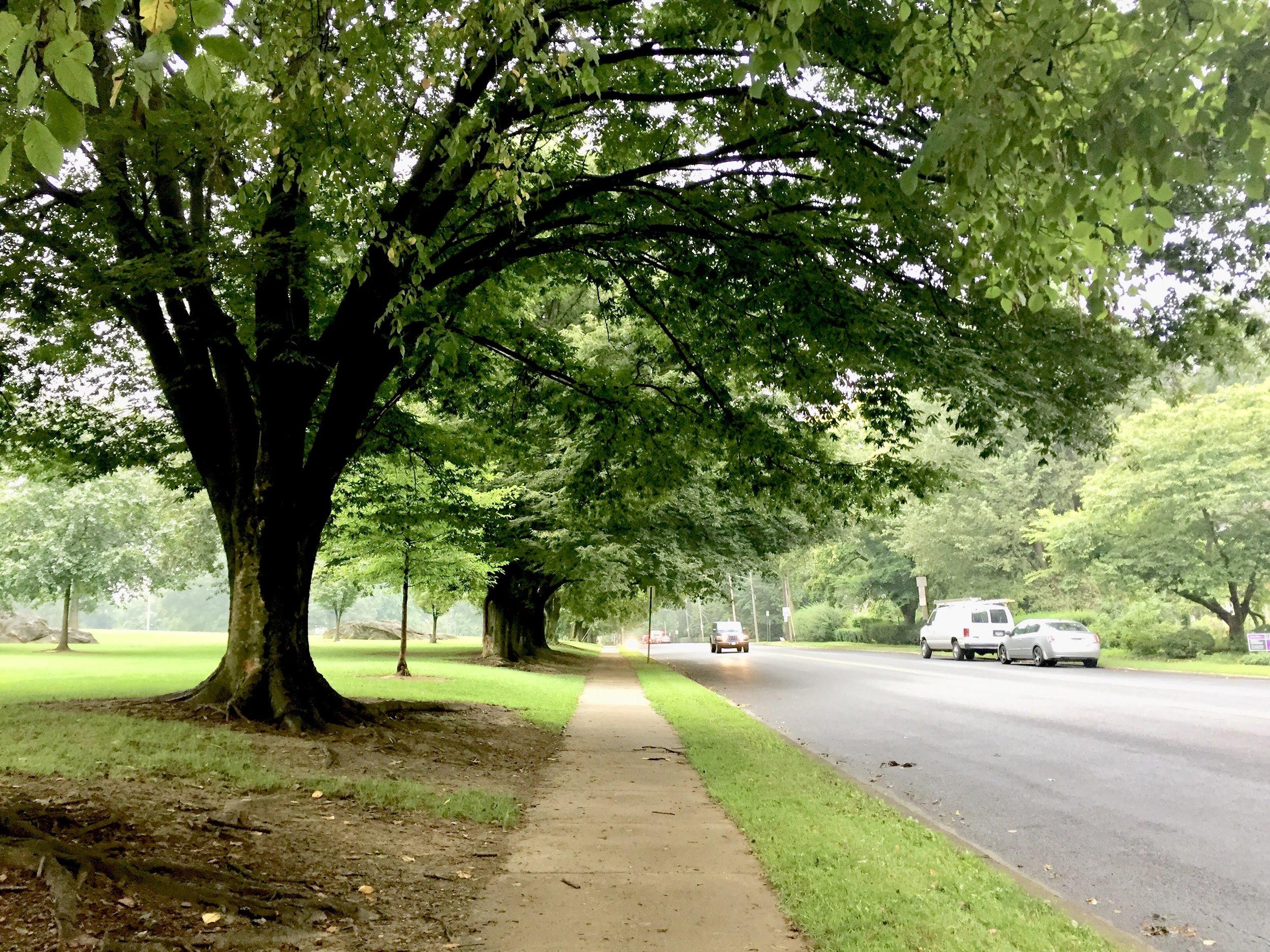 Buchanan Park and Race Ave.