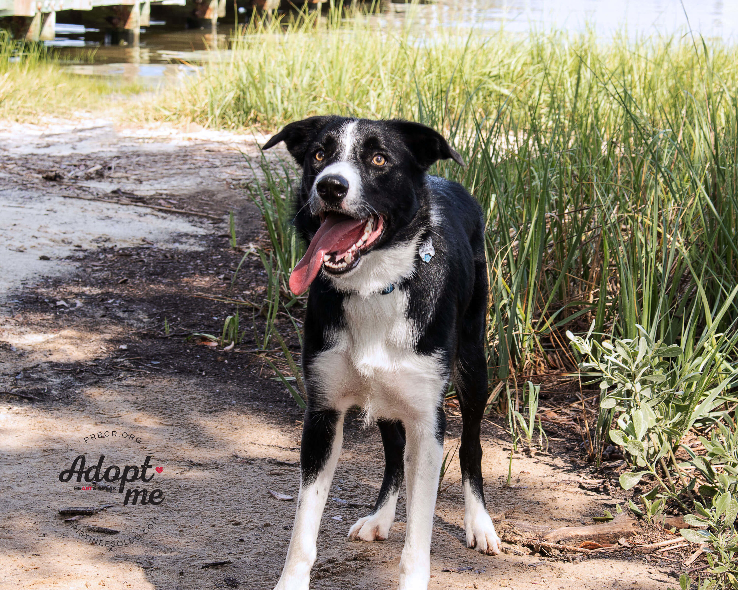 riley adoptable dog