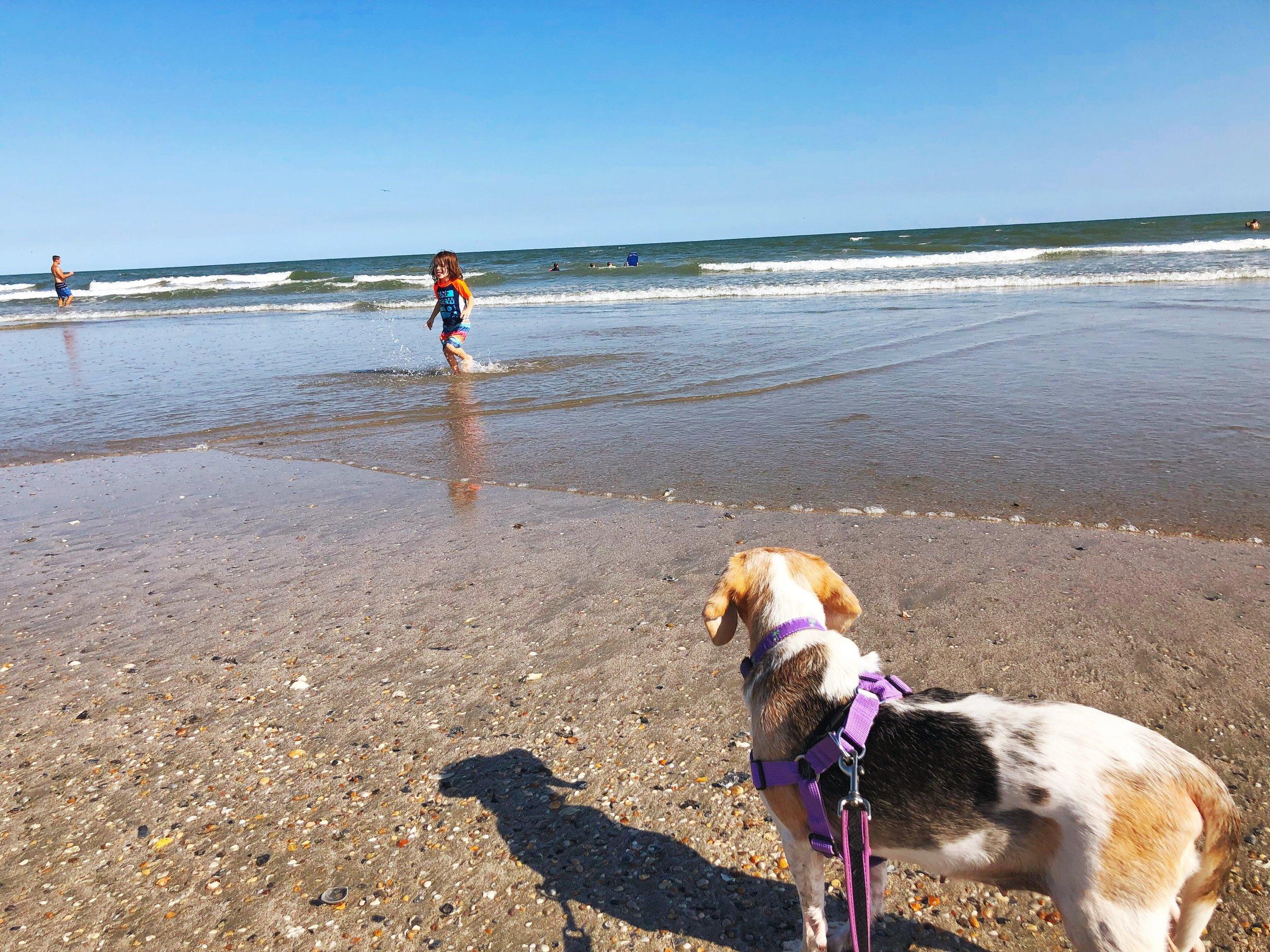 Ruby Skye and B at the beach