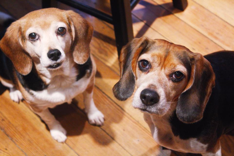 Meadow (left) and Lucy Belle (right) in 2011 at our home in Lancaster, PA