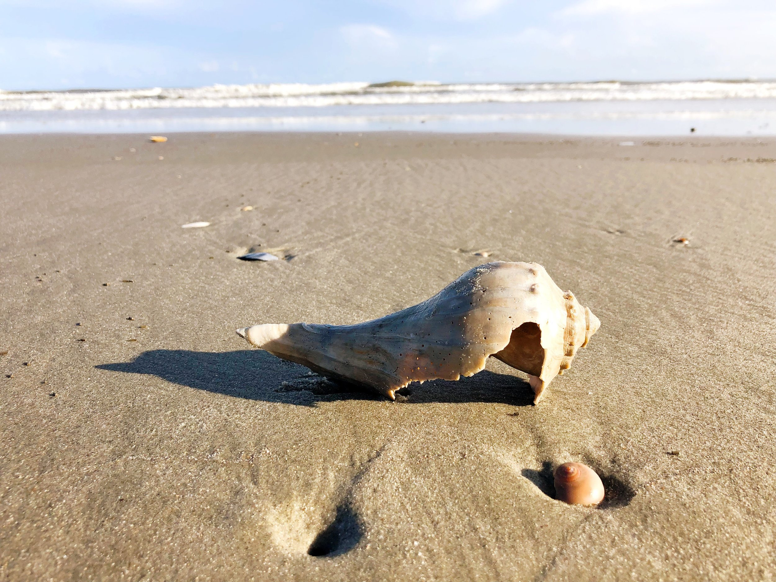 Even the broken shells are beautiful…