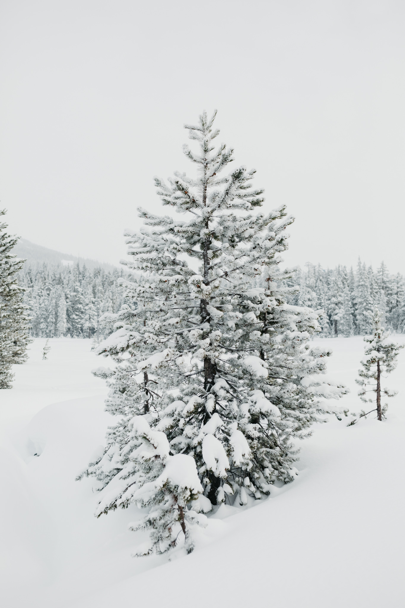 greg+jade-mount-washington-winter-engagement004.JPG