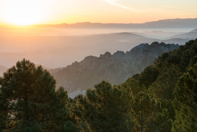 Stone pines and view east from near Puerto de las Palomas at sunrise, Sierra de Grazalema Natural Park, Andalucía, Spain