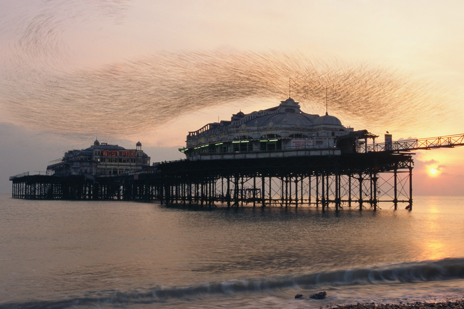Starling flock above Brighton's West Pier, Sussex, England