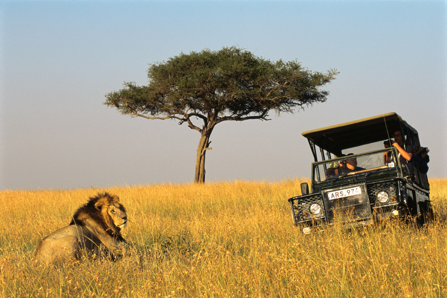 Tourists in Land Rover watching lion, Masai Mara National Reserve, Kenya