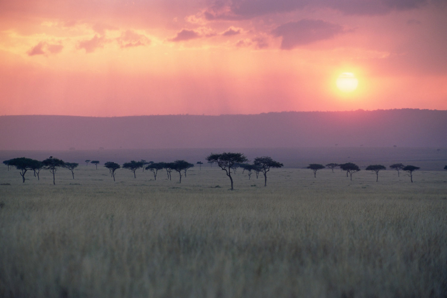 Oloololo Escarpment and desert date woodland at sunset, Masai Mara National Reserve, Kenya