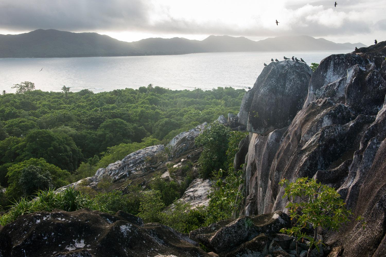 Brown noddies on granite hilltop, Cousin Island Special Reserve, Seychelles