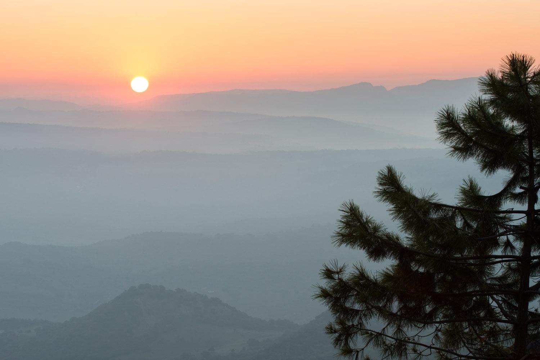 Stone pine and view east from near Puerto de las Palomas at sunrise, Sierra de Grazalema Natural Park, Andalucía, Spain