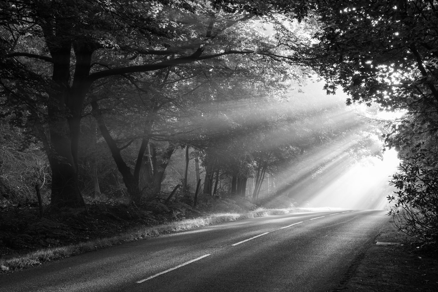 Morning sun rays falling on forest road, Ashdown Forest, Sussex Weald, England