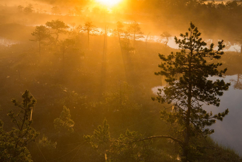 Scots pine and wetland habitat at sunrise, Endla Nature Reserve, Järva region, Estonia