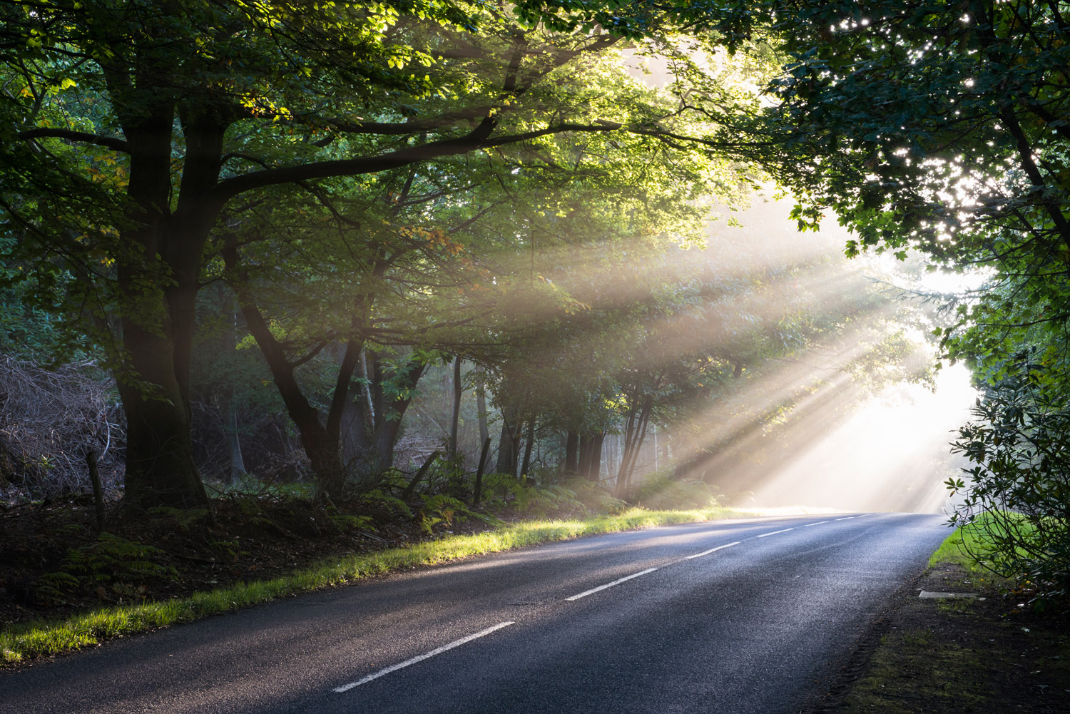 Morning sun rays falling on forest road, Ashdown Forest, Sussex, England