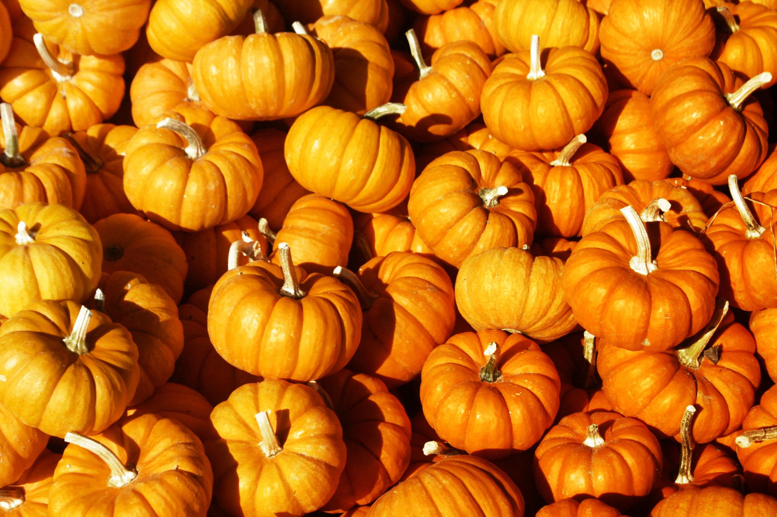 Autumn 42.jpg