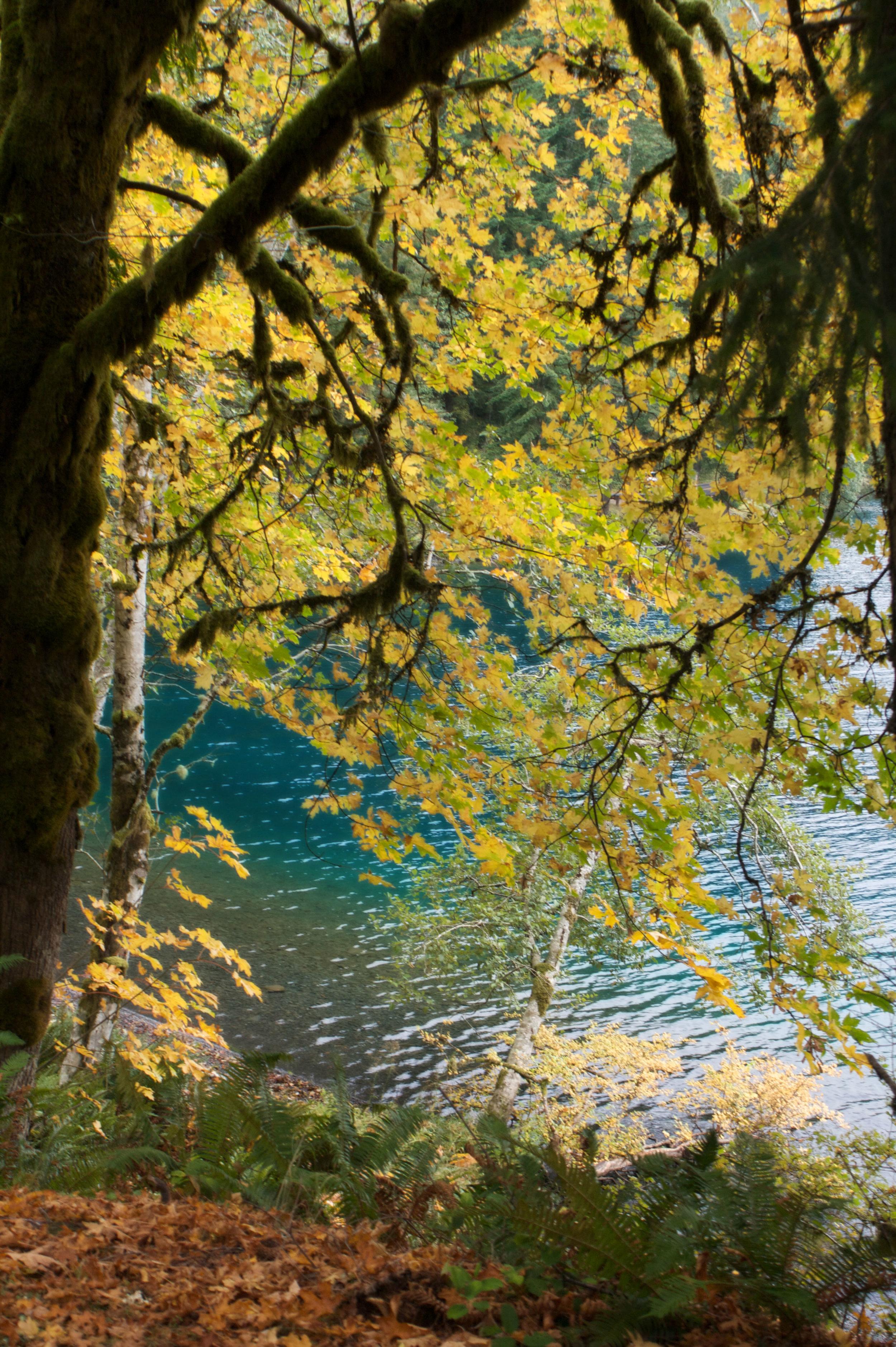 Autumn 20.jpg
