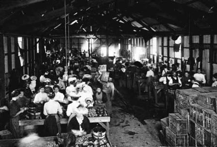 Photo: Melbourne Textile Factory, Museum Victoria PA004794   http://www.womenworkingtogether.com.au/6.Moving%20into%20the%20Public%20World.html