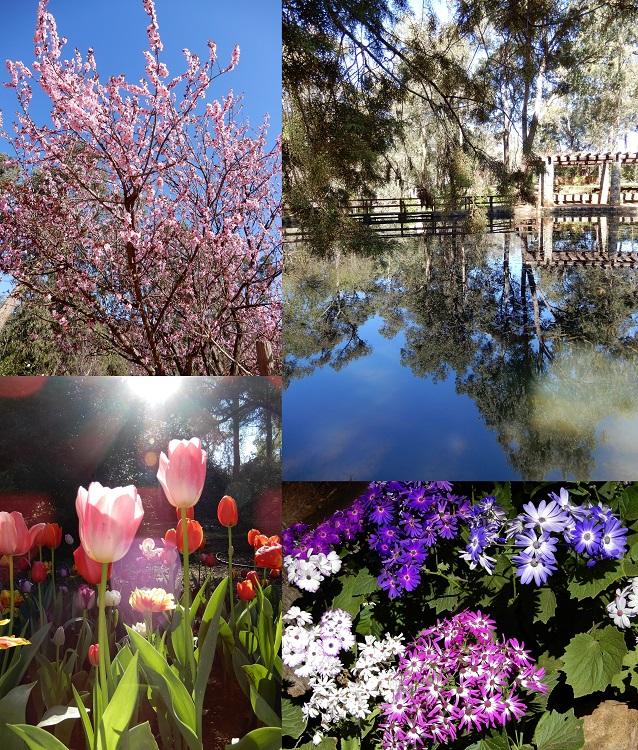Araluen Botanic Park - not so much a Park as a Garden