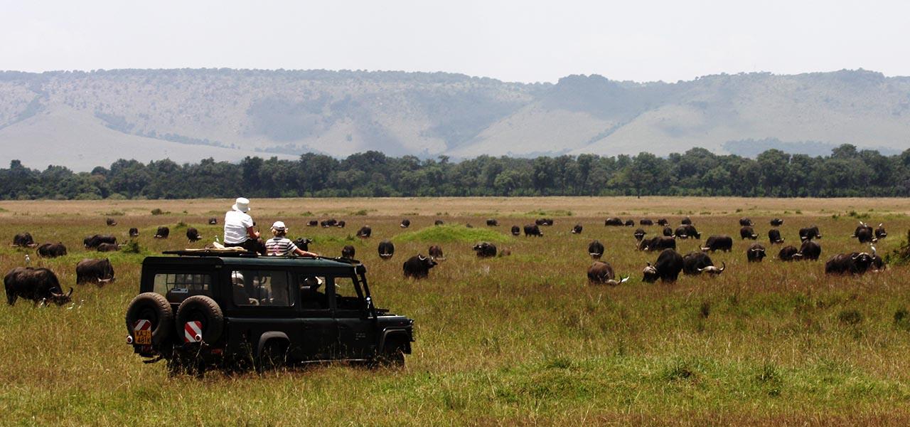 Organising Your Safari   Game viewing in the Masai Mara