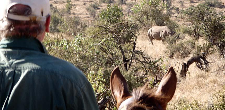 Rhino_at_Borana__13__compressed.jpg