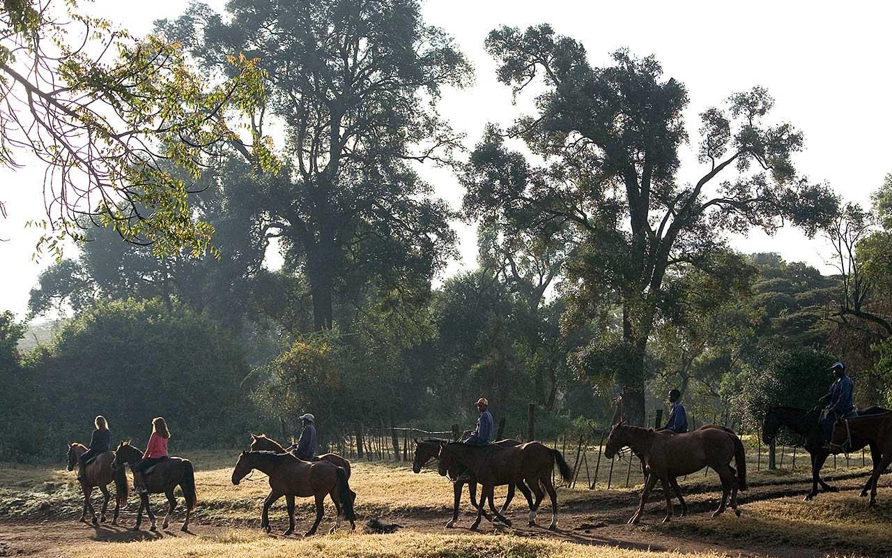 Deloraine   ...home to over 60 safari horses