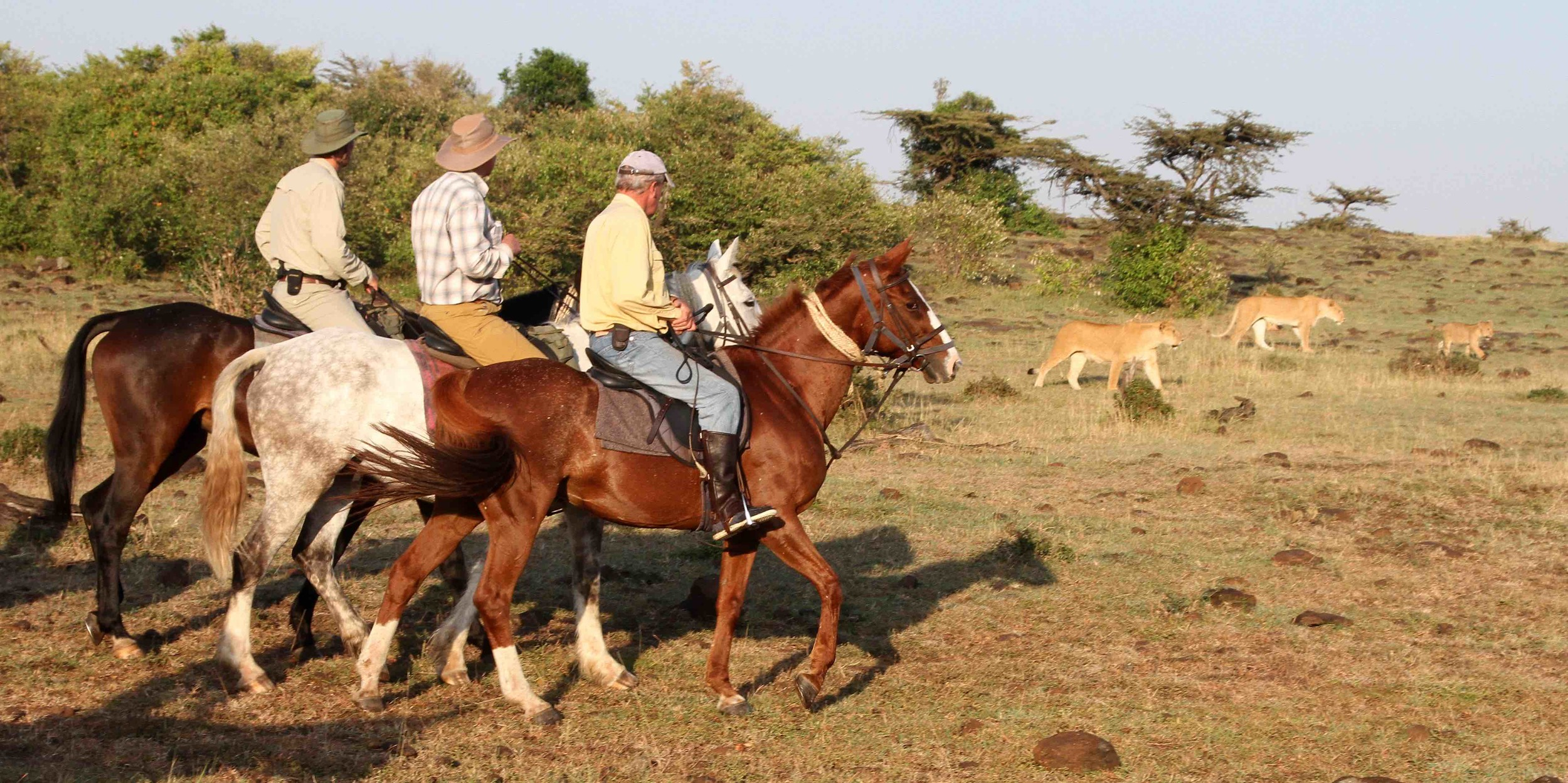 Mobile Riding Safaris   ...extraordinary encounters with big cats