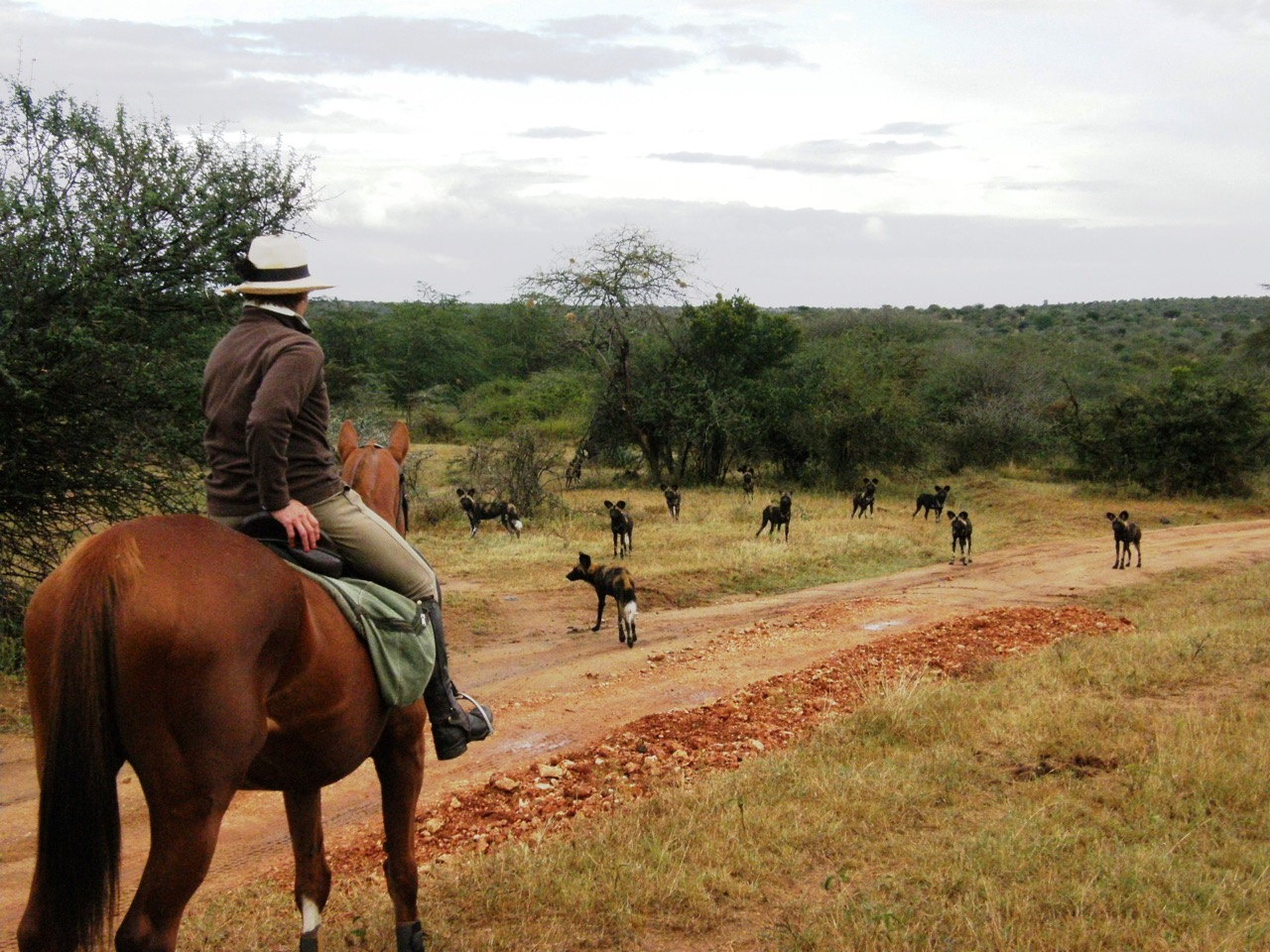 Sosian Horses and wild dog (1).jpg
