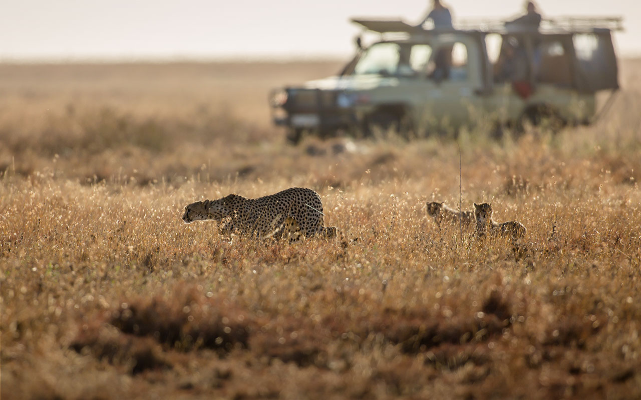 Ekorian's Mugie Camp     Exclusive game viewing