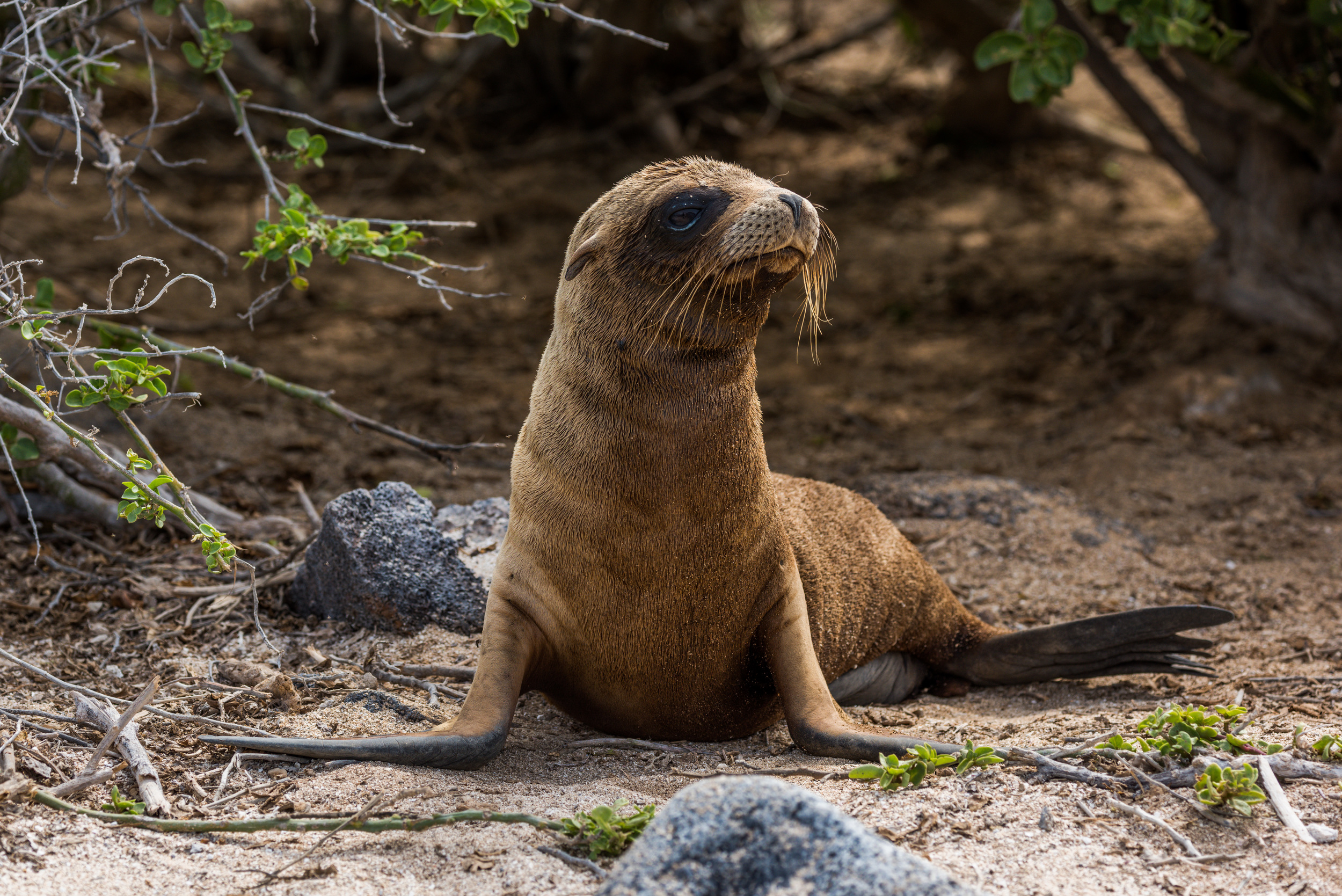 """""""I'm a sea lion, not a seal, 'cause I have ears, see...?"""""""