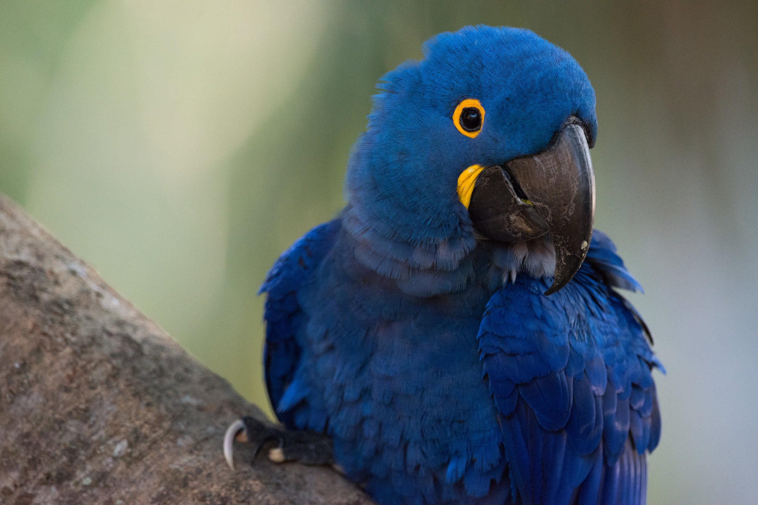 Hyacinth Bucket...sorry, macaw