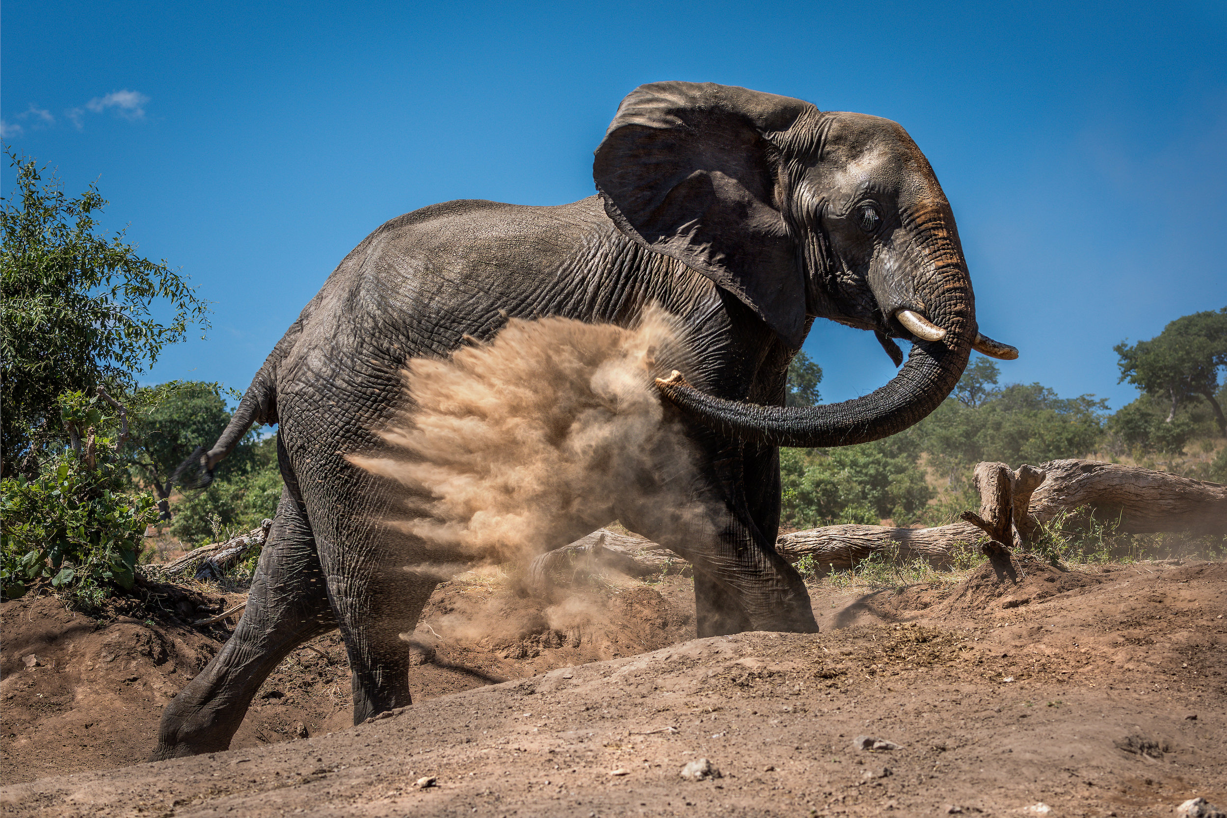 Elephant giving itself dust bath on hillside