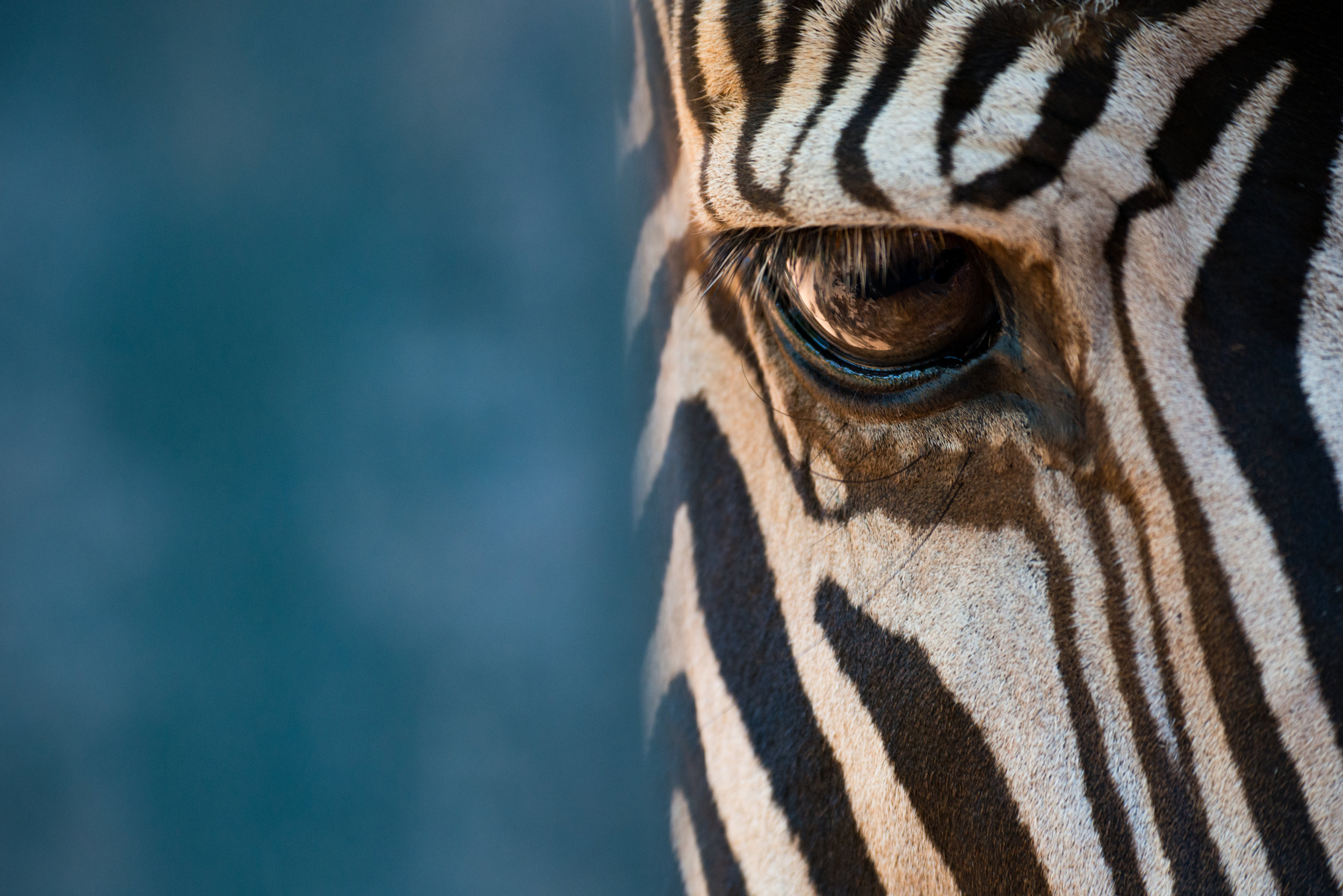 02: Close-up of right eye of Grevy zebra Verdict: Again, a lovely image, you just need to remove yourself from the eye