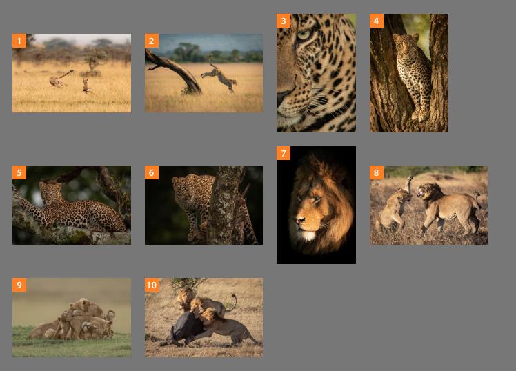 Faux Leather Passport Cover /& Tag jungle africa serengeti hunt Leopard Fur