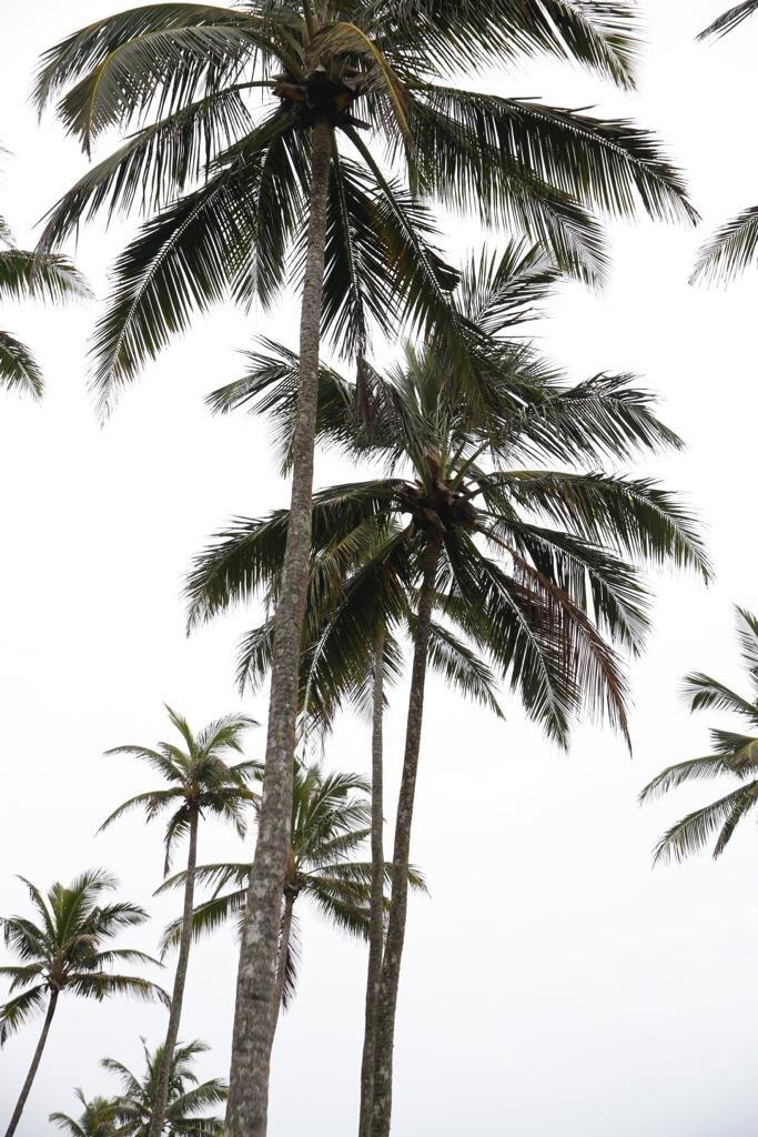 ELYSE KNOWLES SRI LANKA 2019 10.jpg