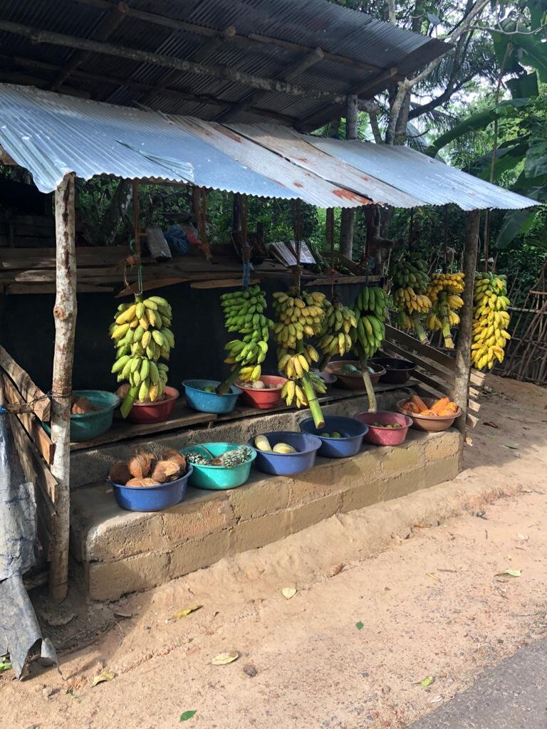 Elyse Knowles Sri Lanka 2019  17.jpg