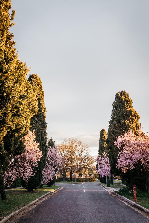 Lean+Timms+Canberra+A8.jpg