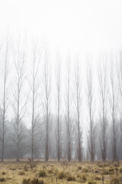 Lean+Timms+Canberra+Fog+(1+of+21).jpg