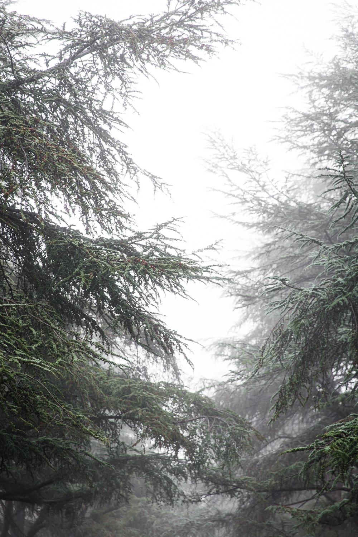 Lean+Timms+Canberra+Fog+(3+of+21).jpg