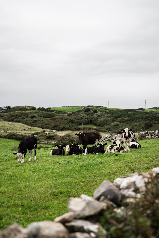 Ireland West Coast Lean Timms (4 of 45).jpg